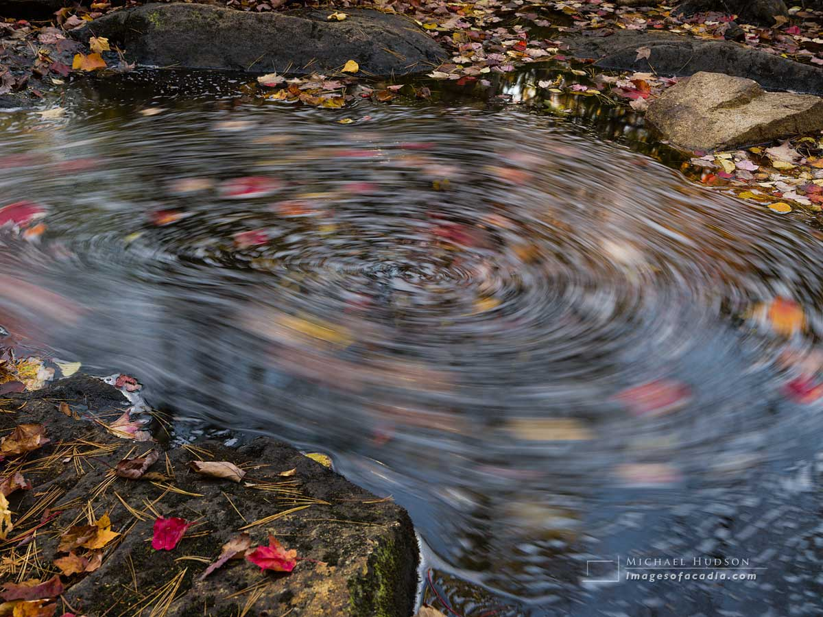 Swirling leaves in the middle of the brook