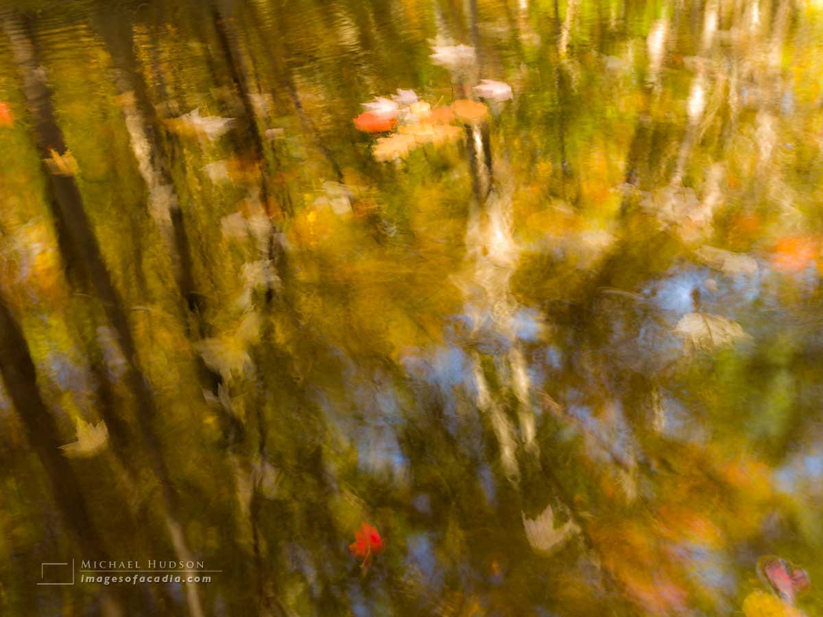 Autumn foliage reflected in Duck Brook, Acadia National Park, Ma