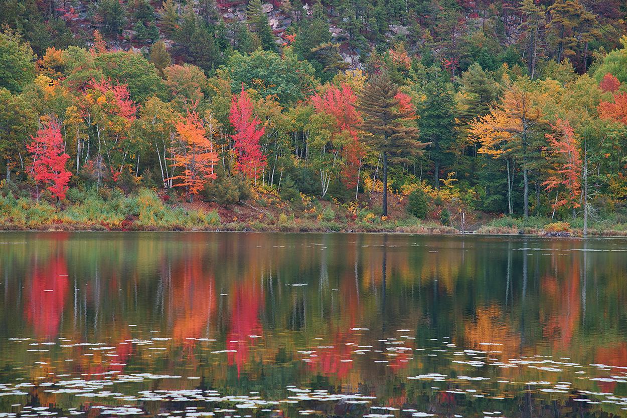 Beaver Dam Pond.jpg