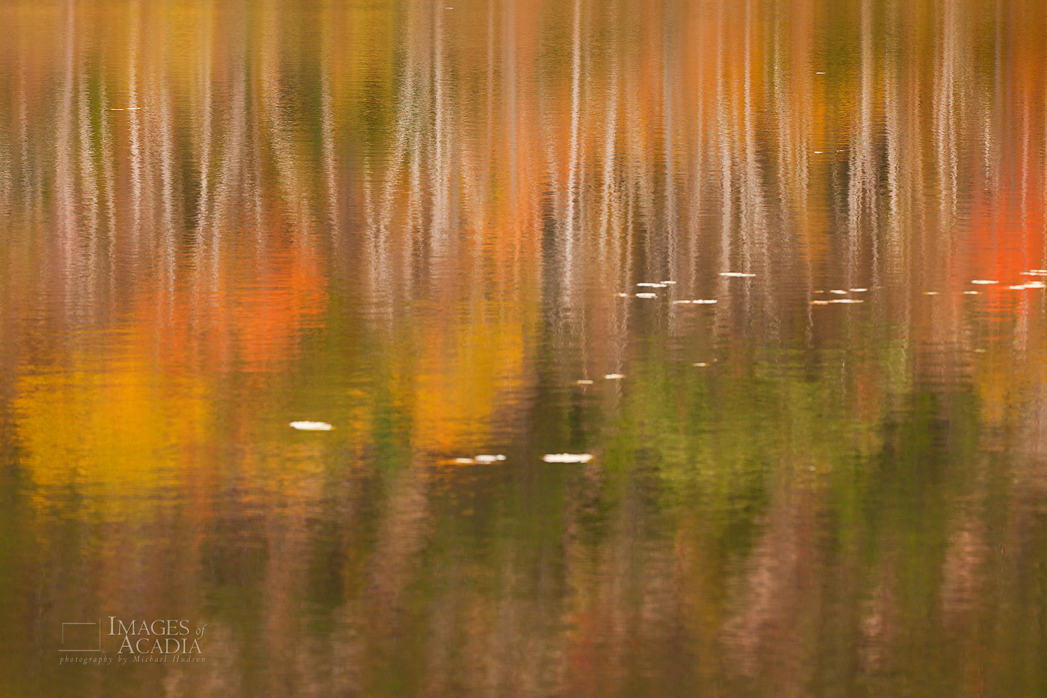 Reflections on Beaver Dam Pond