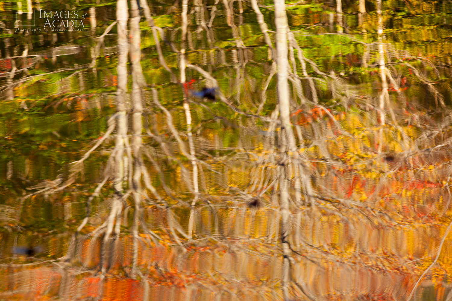 Autumn Reflections in Pond on the Canon Brook Trail