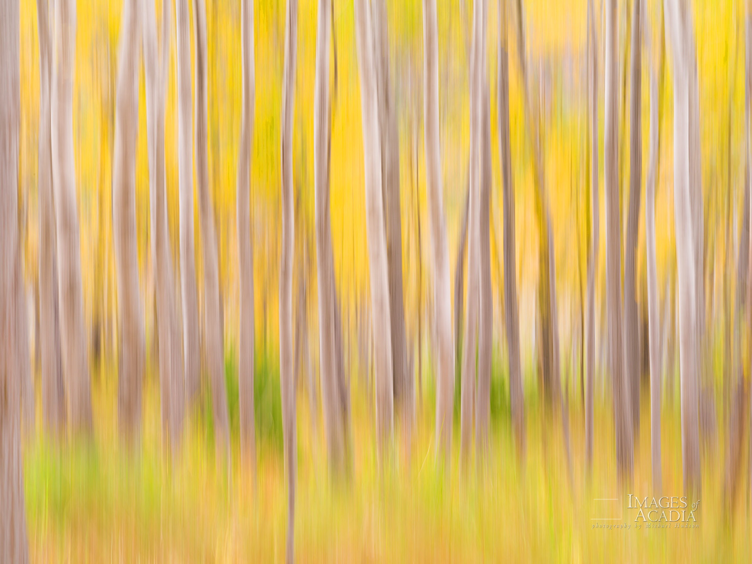 Autumn Woods near the Great Meadow