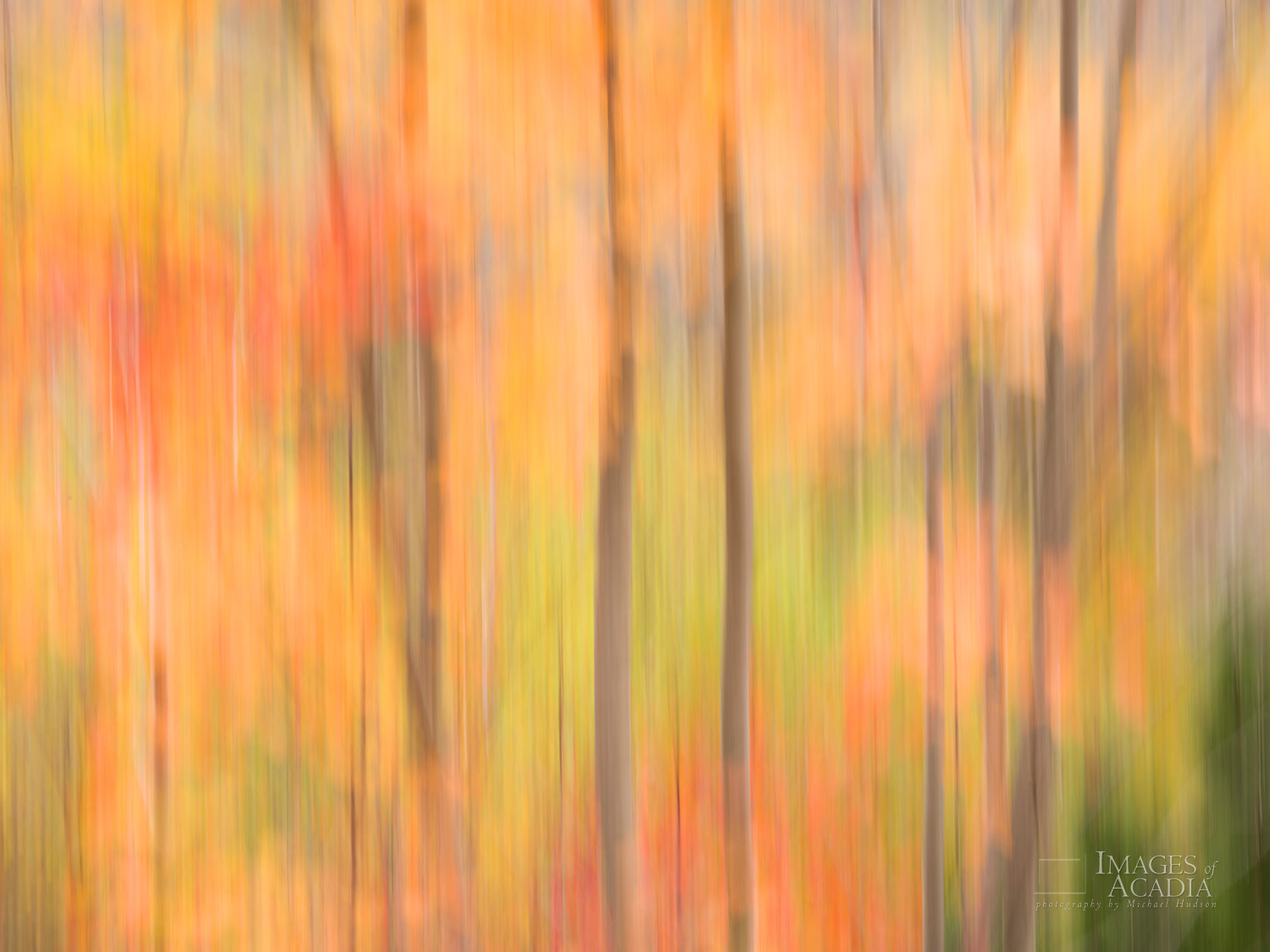 Abstract Tree Trunks