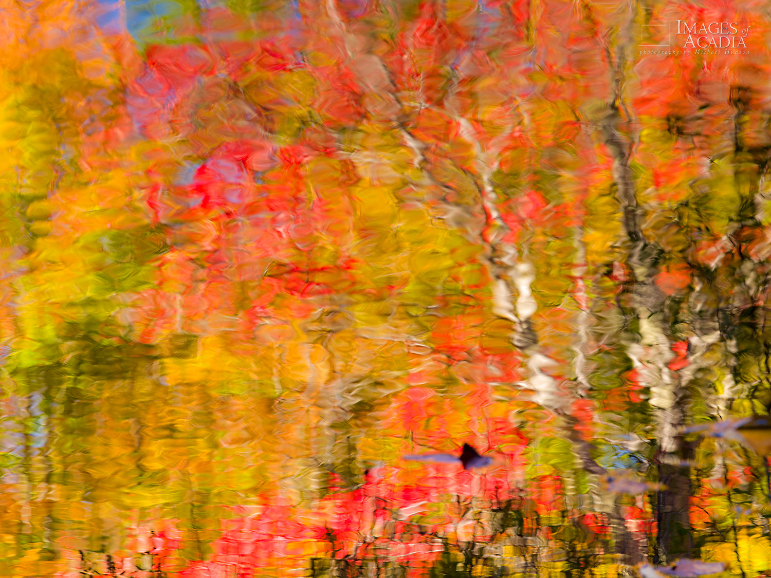 Abstract reflections along the Canon Brook Trail/ Kane Path