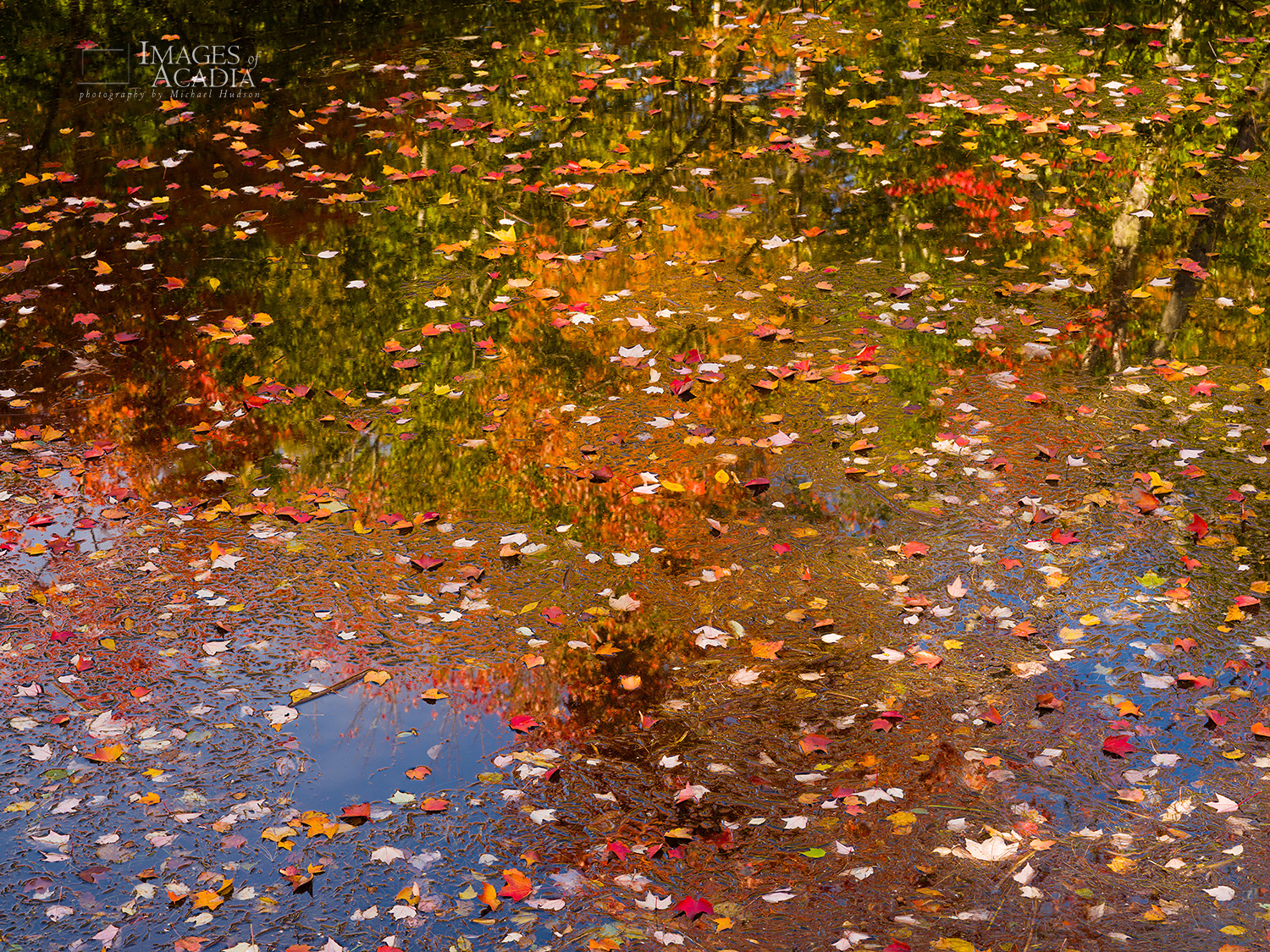 Fallen leaves and reflections in the pond under the footbridge, Somesville