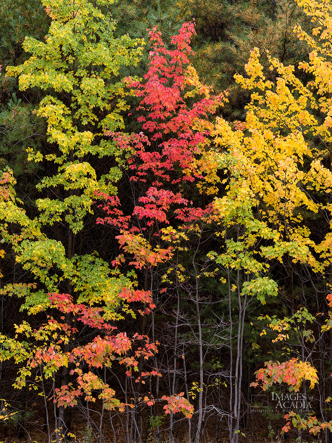 Colorful foliage, Acadia National Park