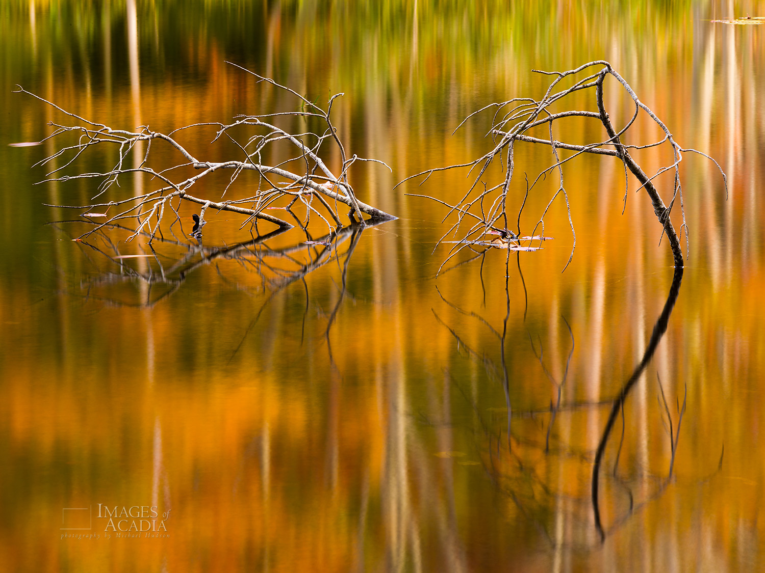 Reflections in a small pond by the Canon Brook Trail