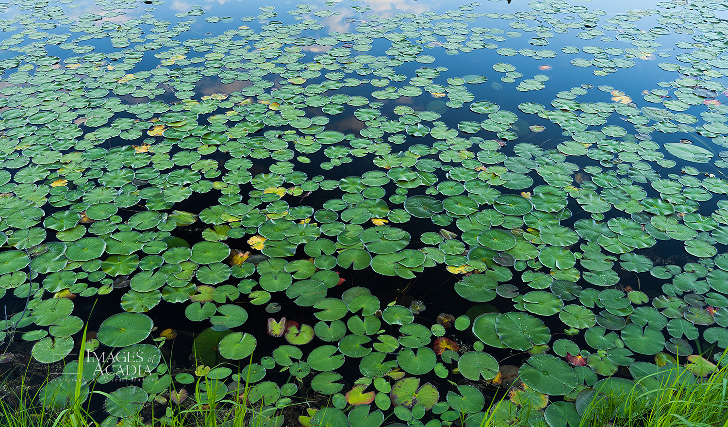 Pond life in the Witch Hole Pond area of Acadia National Park
