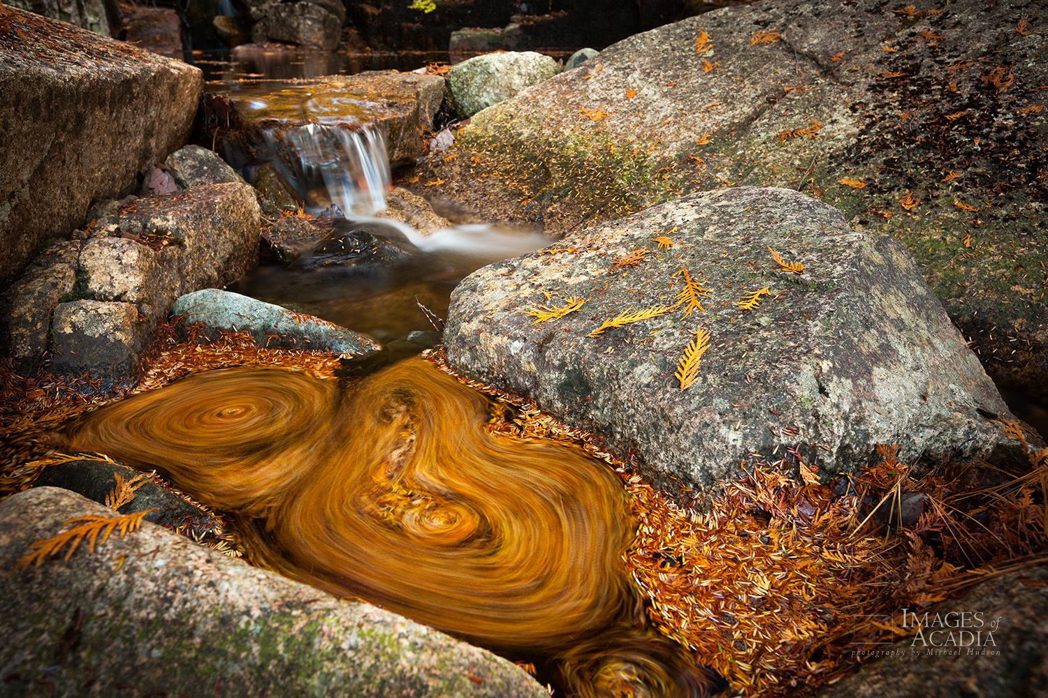Pine needles swirling in a small pool of water in Whitecap Stream
