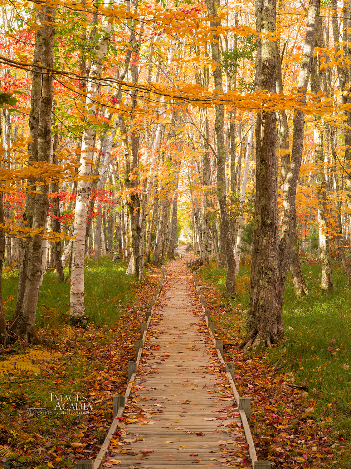 Autumn along the Jesup Path