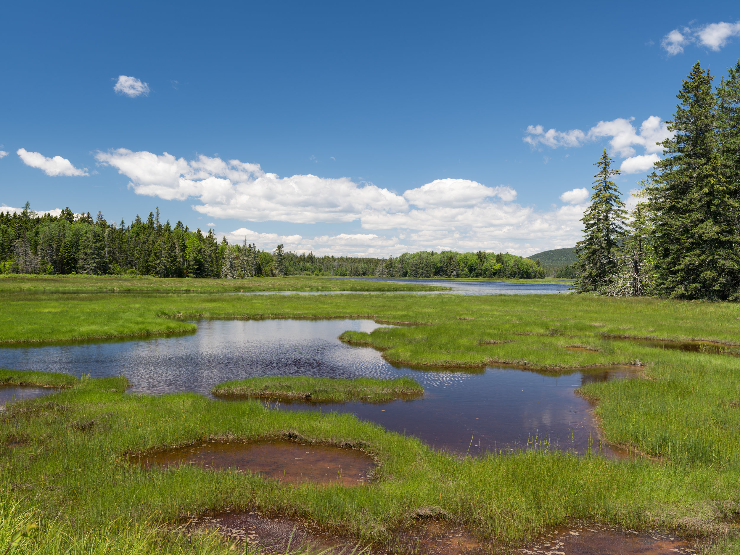 Bass Harbor Marsh, Acadia National Park, Maine, USA