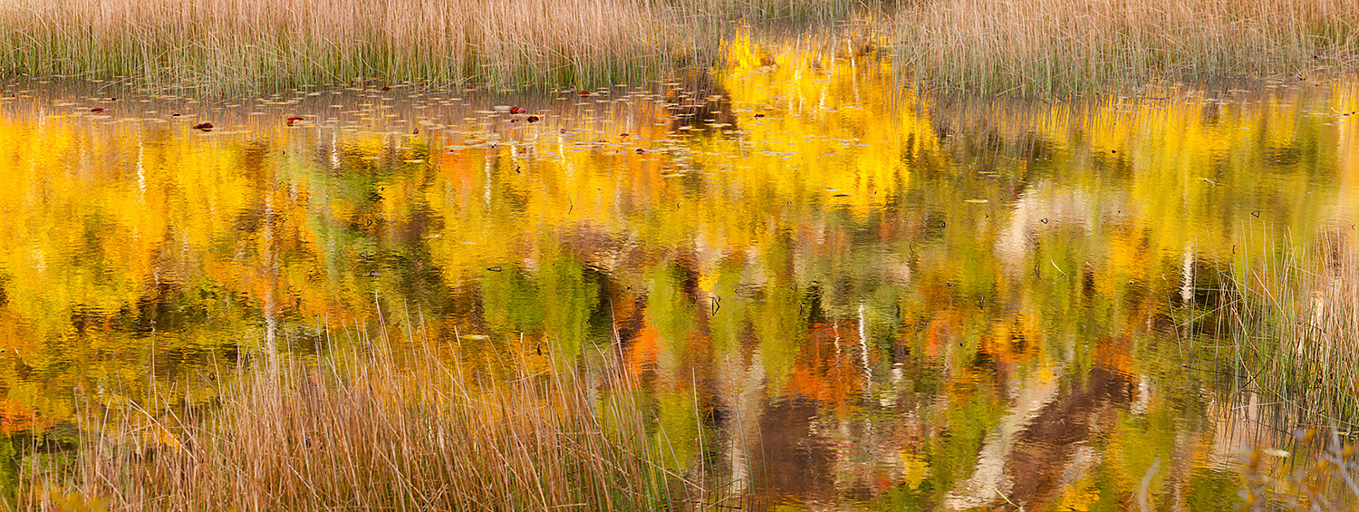 Autumn reflections in the Tarn at dawn, Acadia National Park