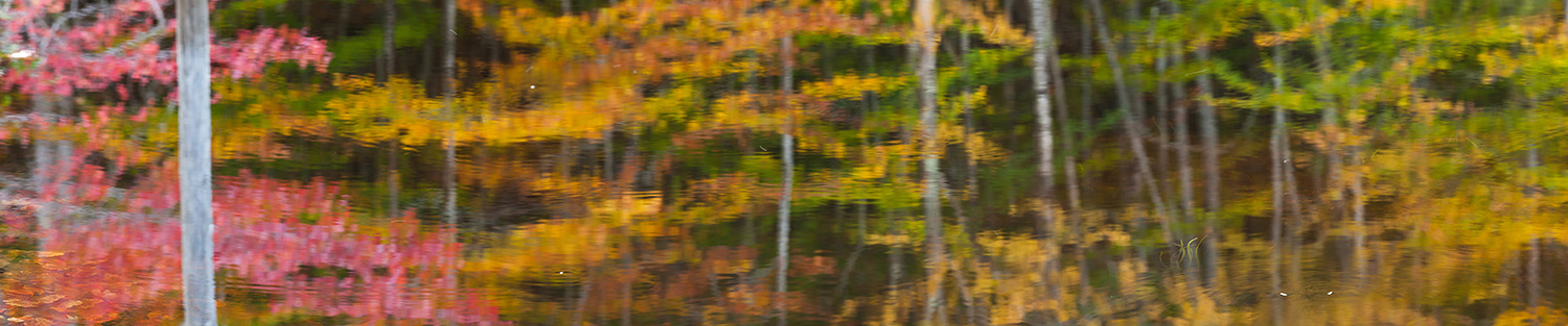 Reflections in small pond, Canon Brook Trail, Acadia National Pa
