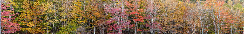 Autumn Foliage, Acadia National Park, Maine, USA