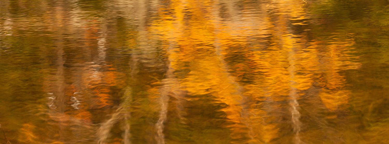 Reflections in Seal Cove Pond, Mount Desert Island, Maine, USA