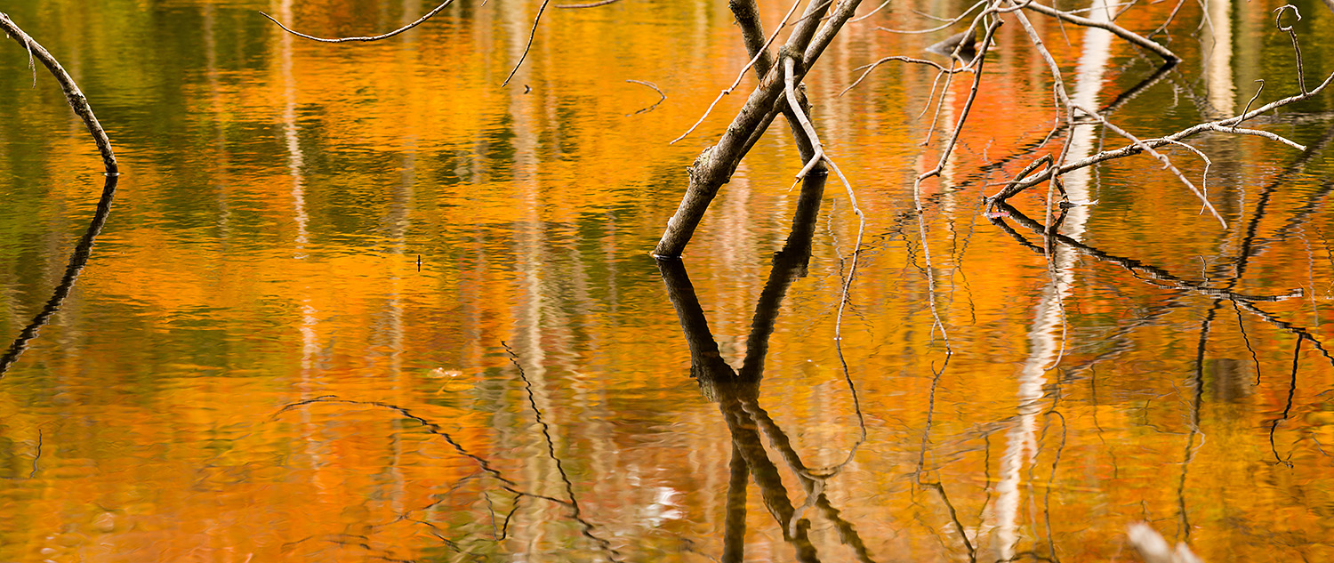 Reflections in a small pond by the Canon Brook Trail, Acadia Nat