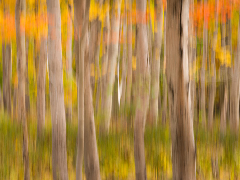 Woods near the Great Meadow, Acadia National Park, Maine, USA