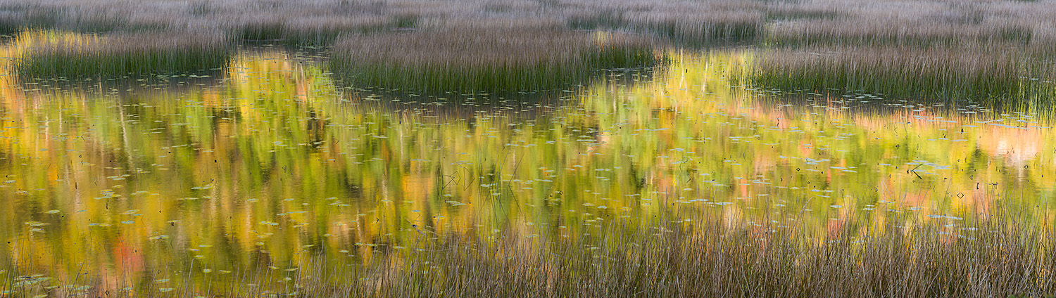 Reflections and Reeds at the Tarn, Acadia National Park, Maine,
