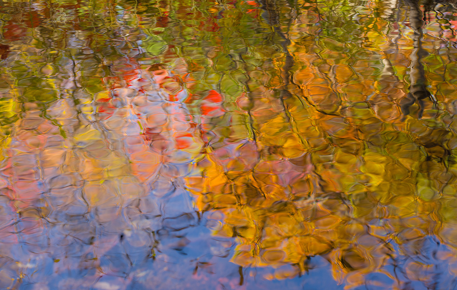 Abstract Reflections, Duck Brook, Acadia National Park