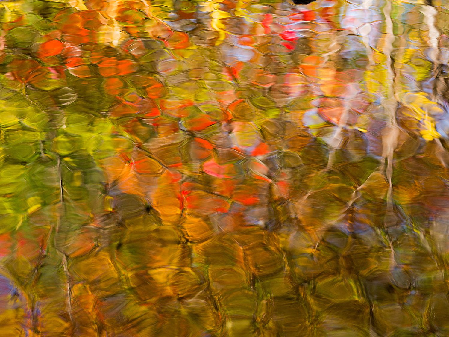 Abstract reflections at Duck Brook, Acadia National Park, Maine,