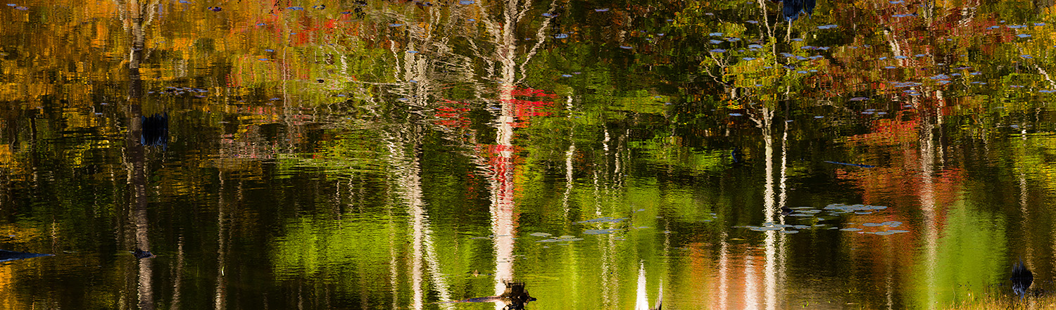 Abstract reflections along the Canon Brook Trail/ Kane Path, Aca