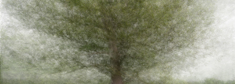 Tree Circumambulations- 360 degree collage