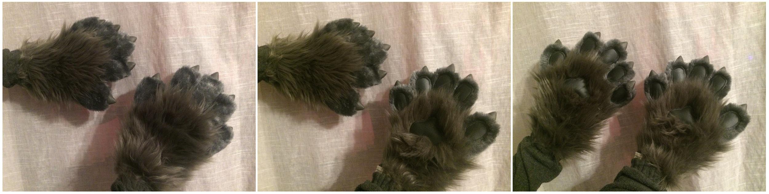 carnate paws.jpg
