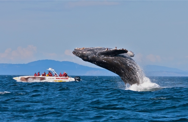 If you have never seen whales or orcas, this is your change.