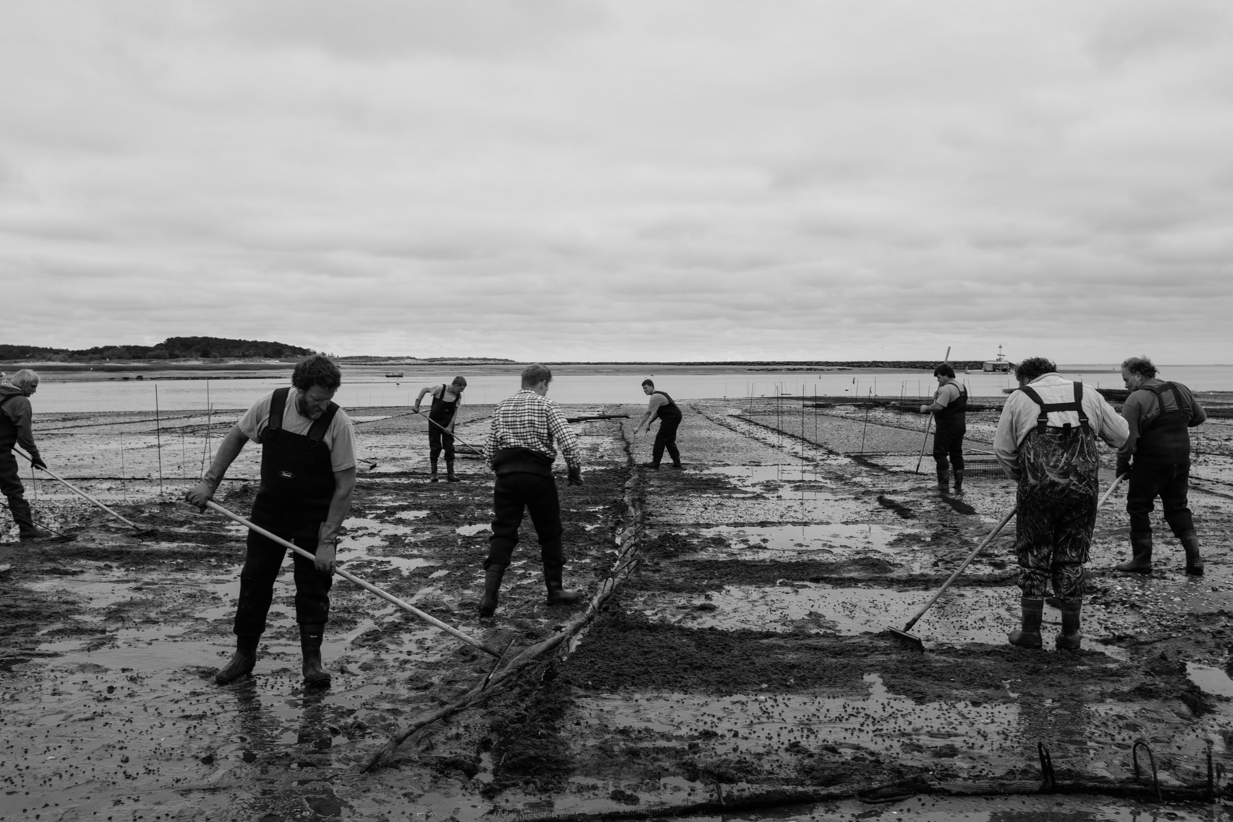 FIRST LIGHT: CAPE COD OYSTERMEN (BOOK)