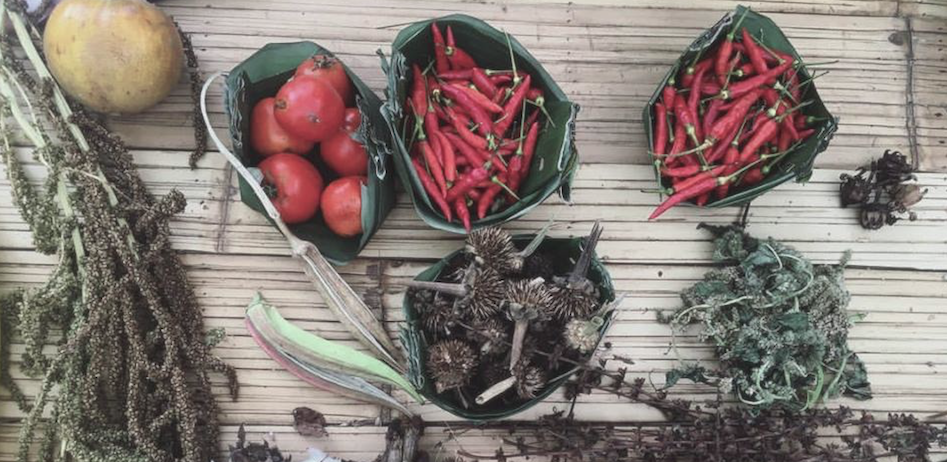KUL KUL FARM: SEED, SOIL & SOCIETY