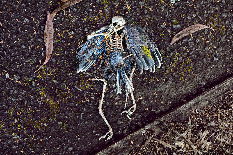 2-The-Parrot.jpg
