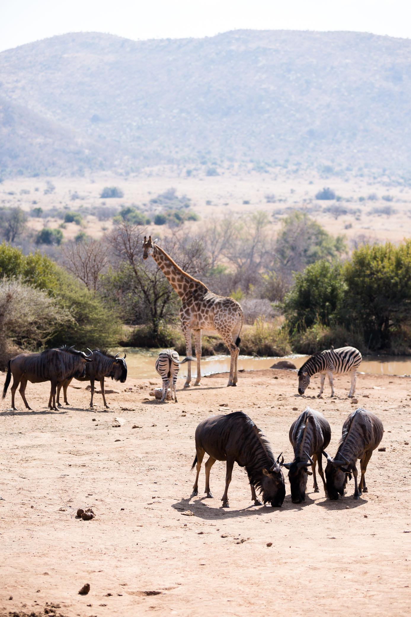 Africa Pilanesberg-19.jpg