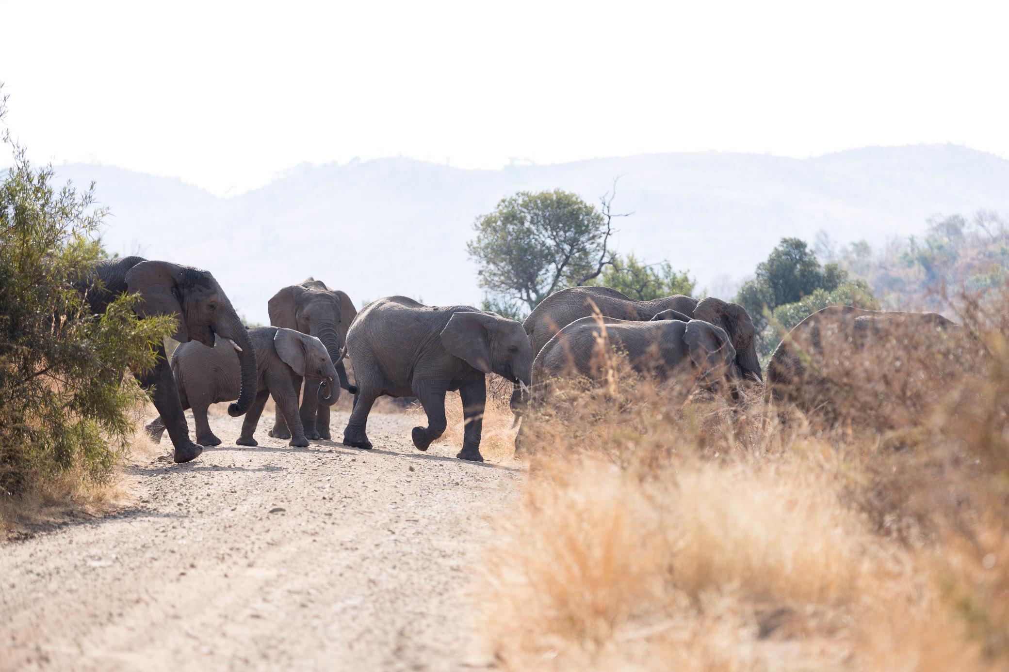 Africa Pilanesberg-22.jpg