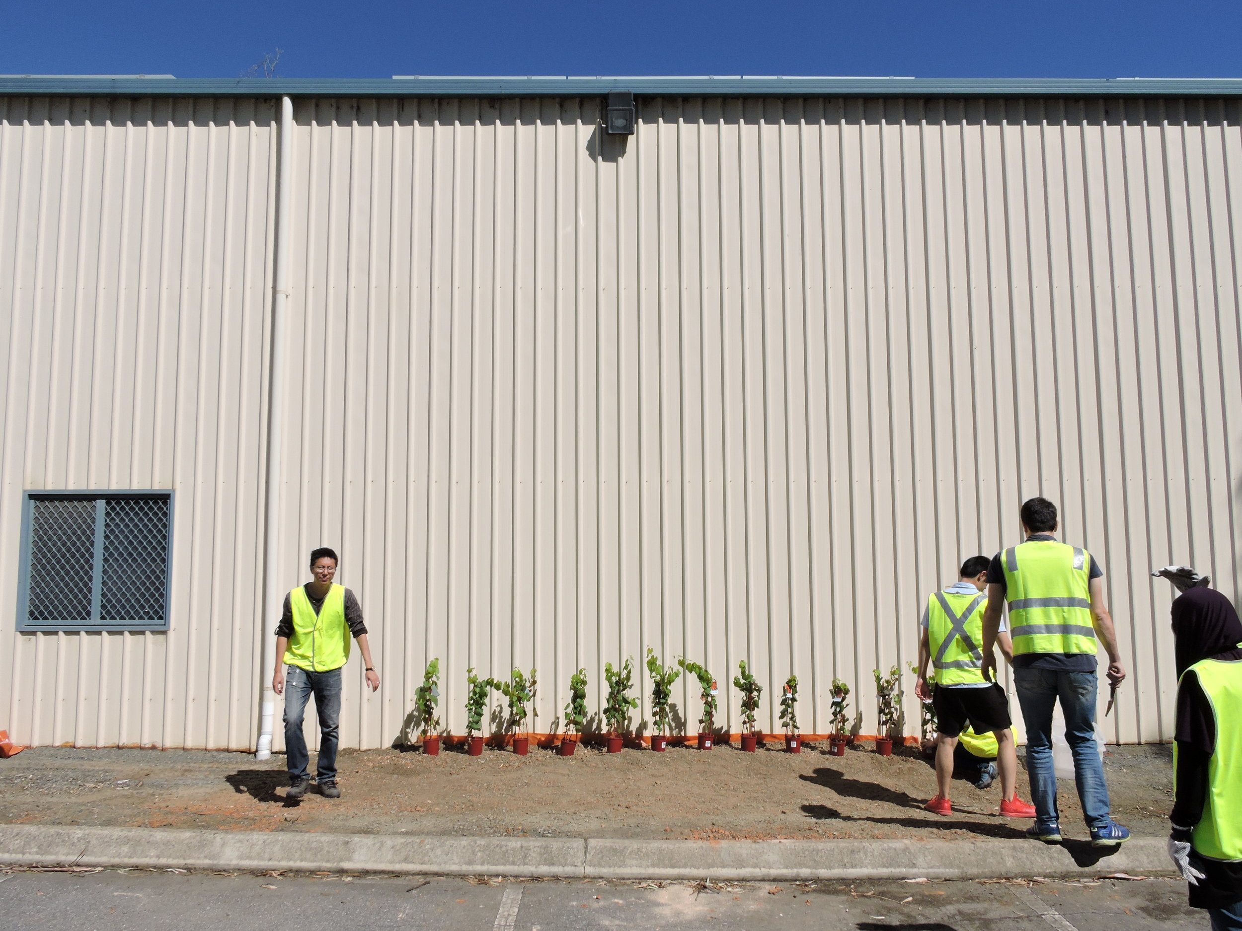 20160321_JQF04_urban planting (20).JPG