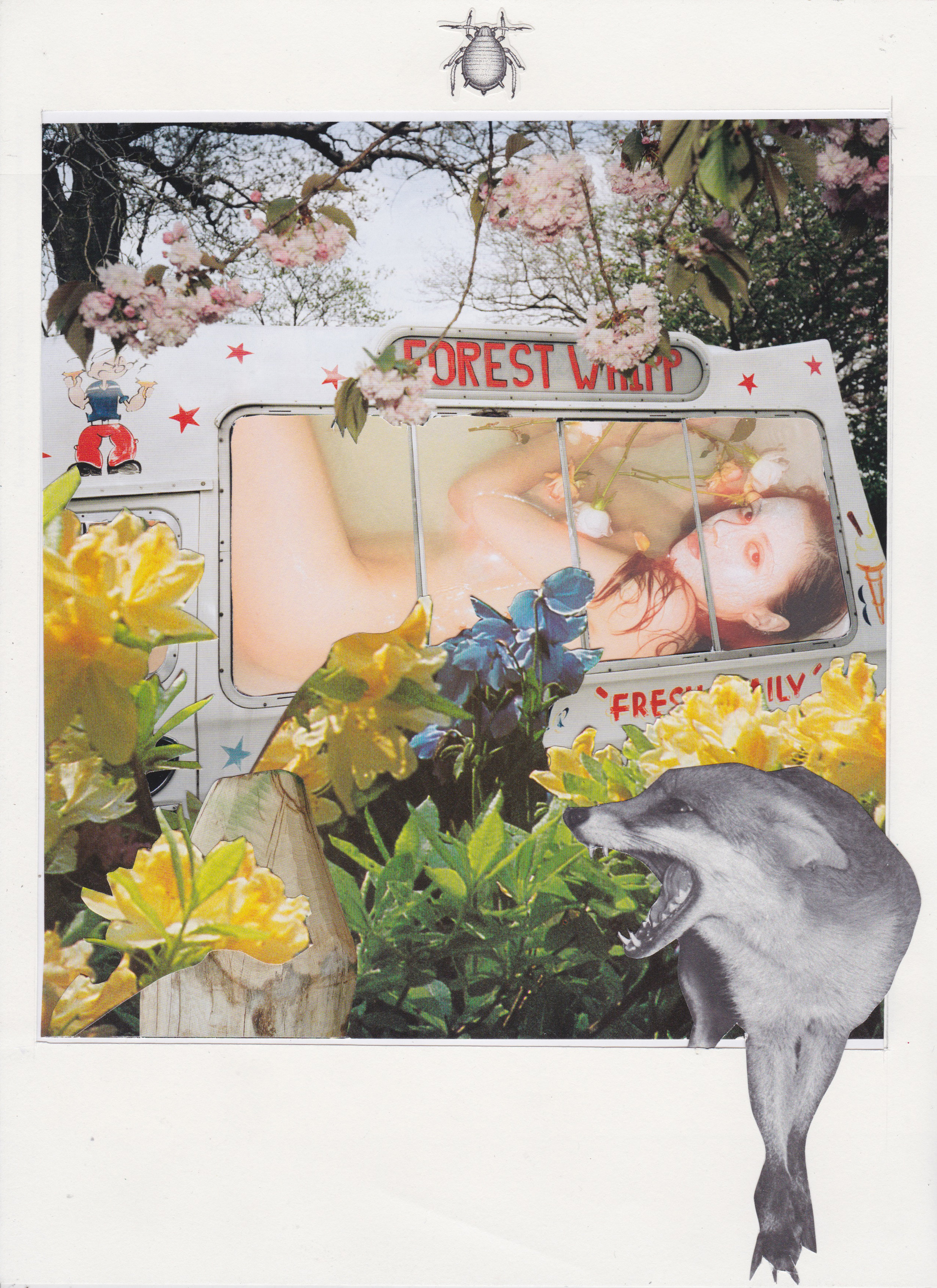 Forest Whipp