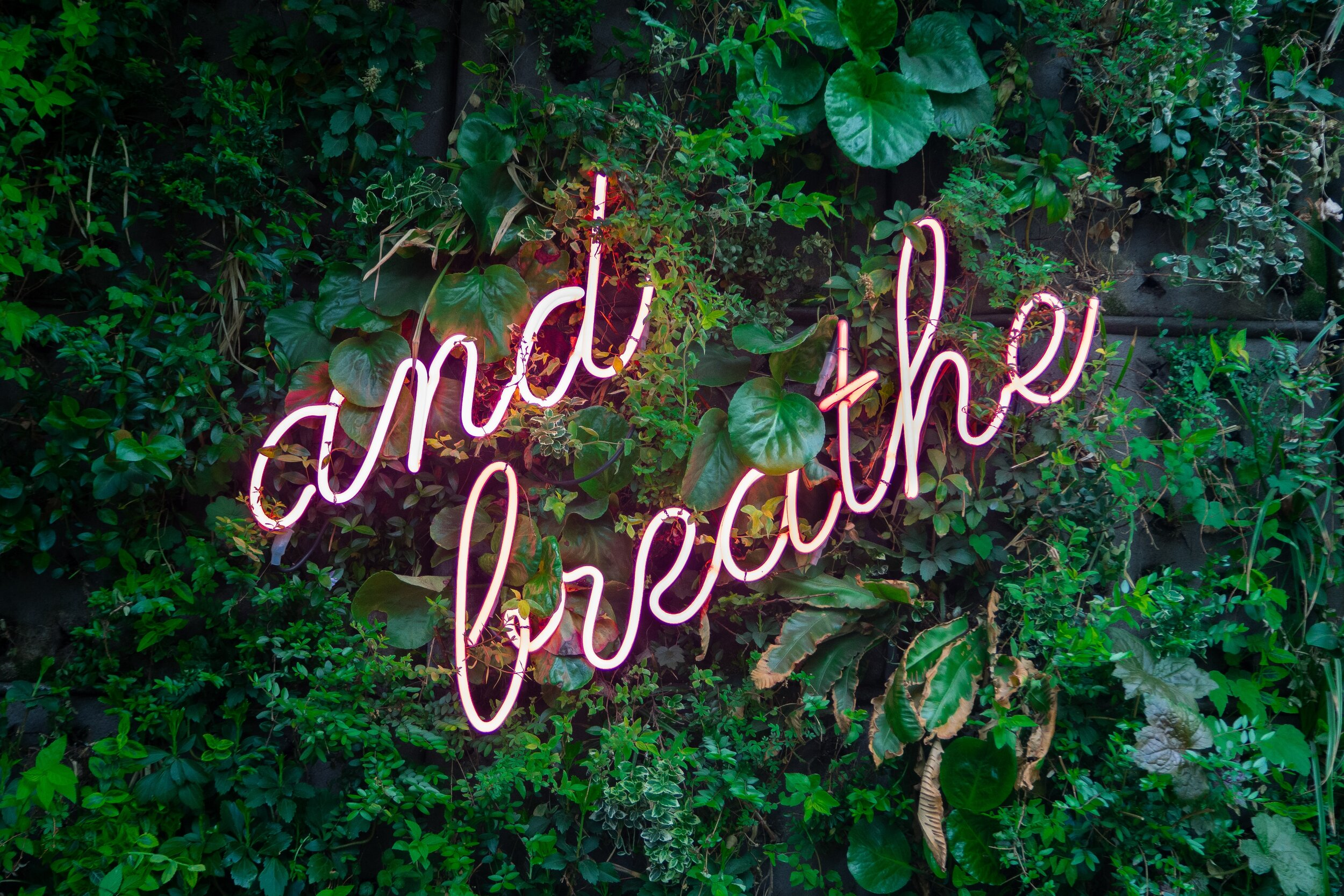 Image Description: A neon sign saying 'and breathe' on a green foliage wall