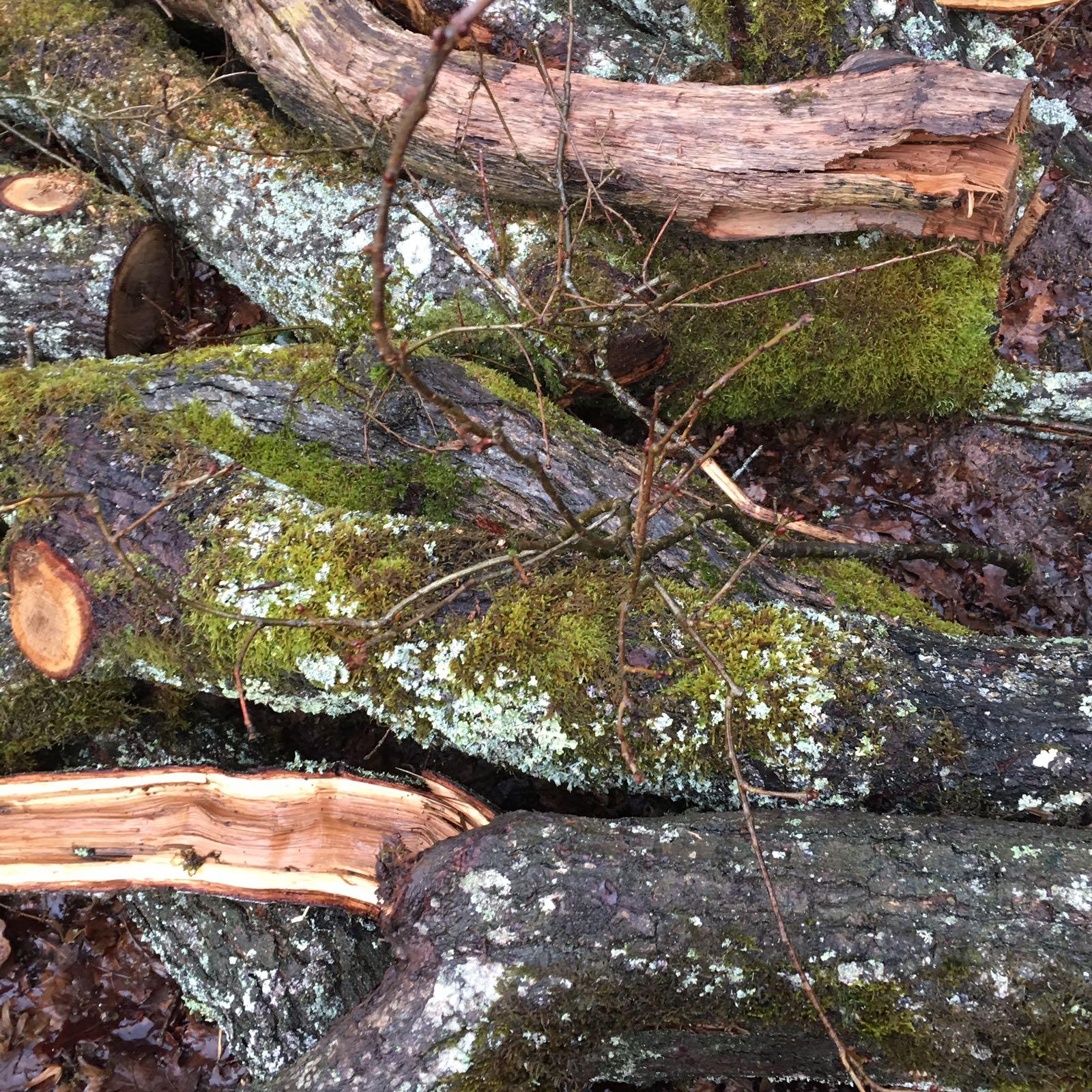 Stranded logs