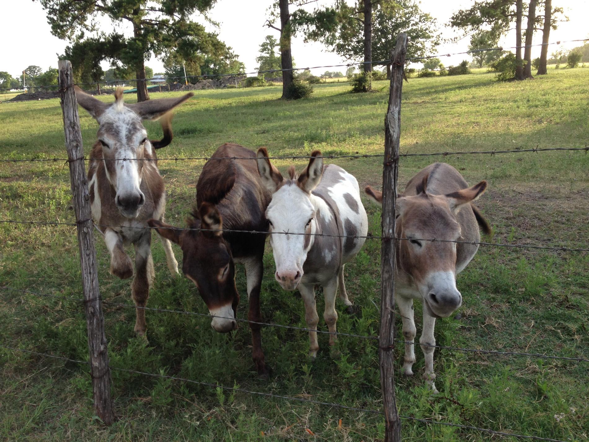 ranch08.jpg