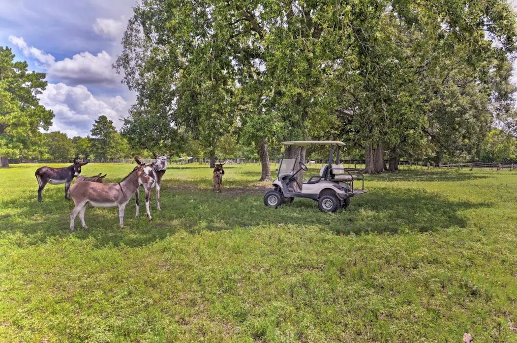 Soma Ranch Donkeys and Cart copy.jpg