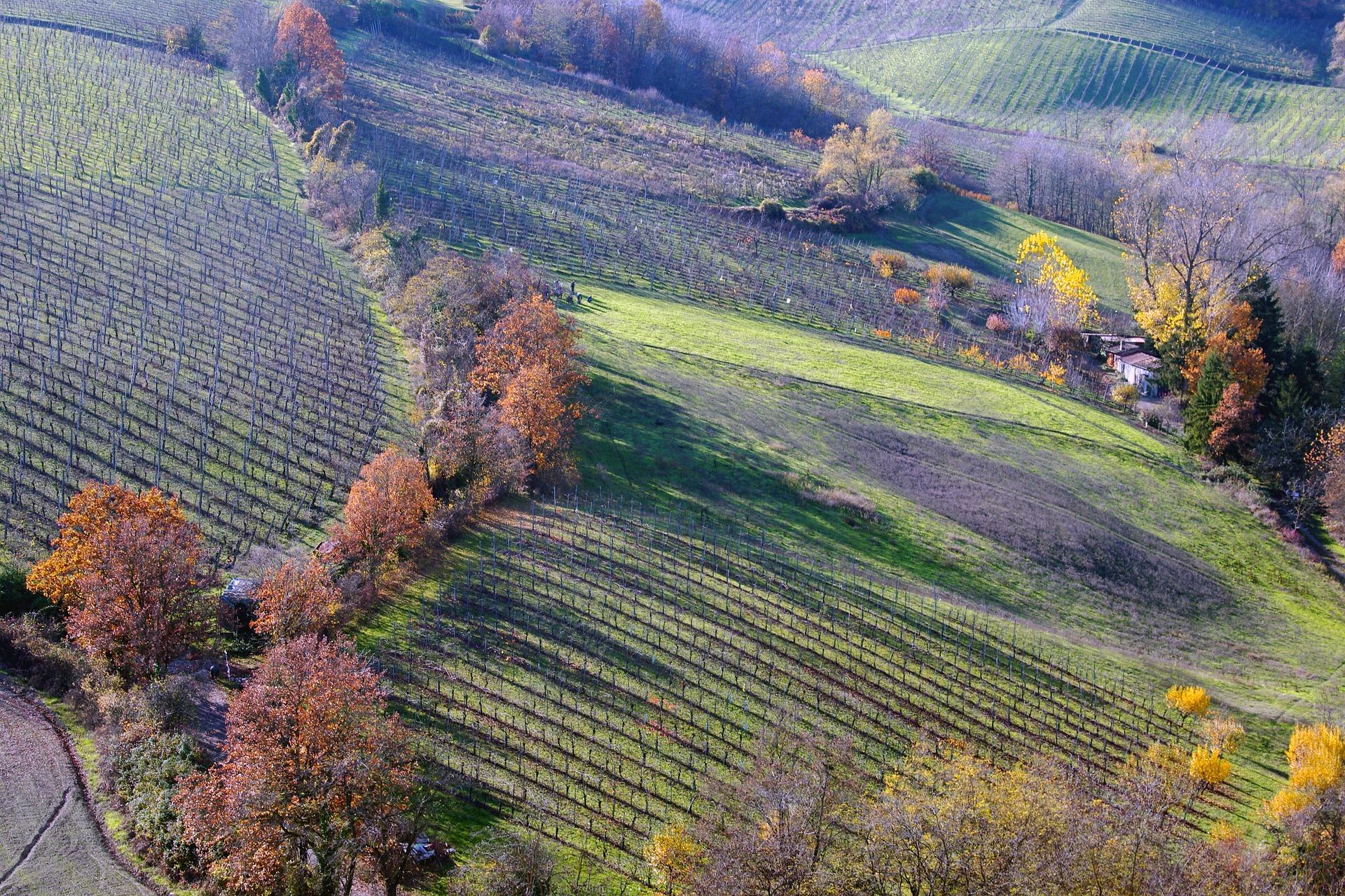 EMilia Romagna, Langhirano.jpg