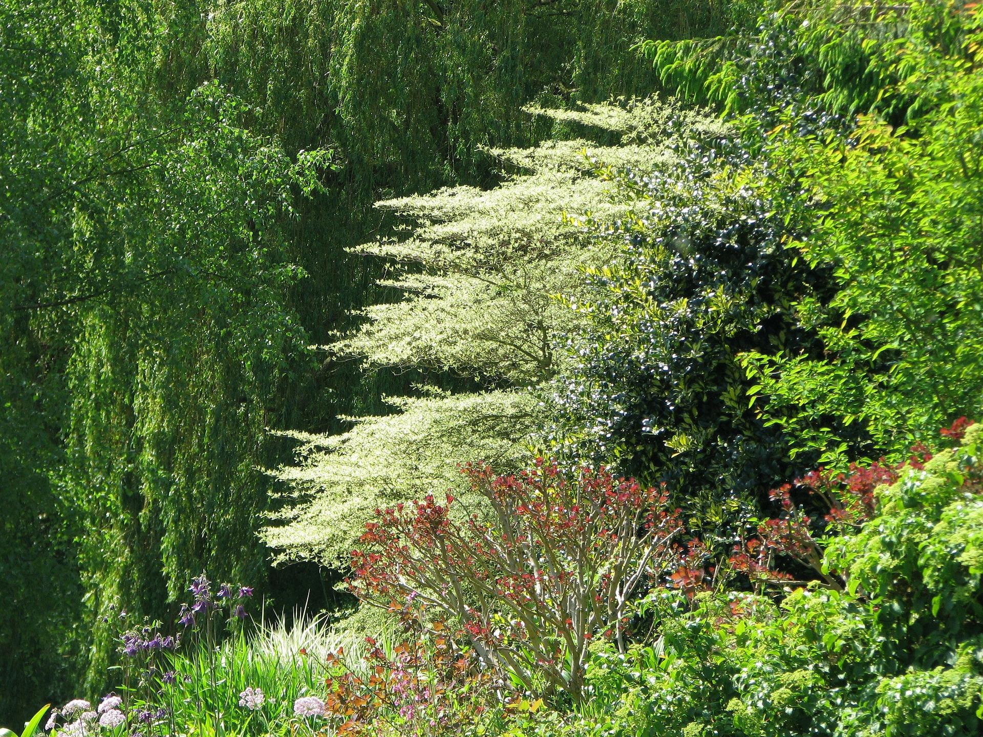 Beth Chatto Garden.jpg