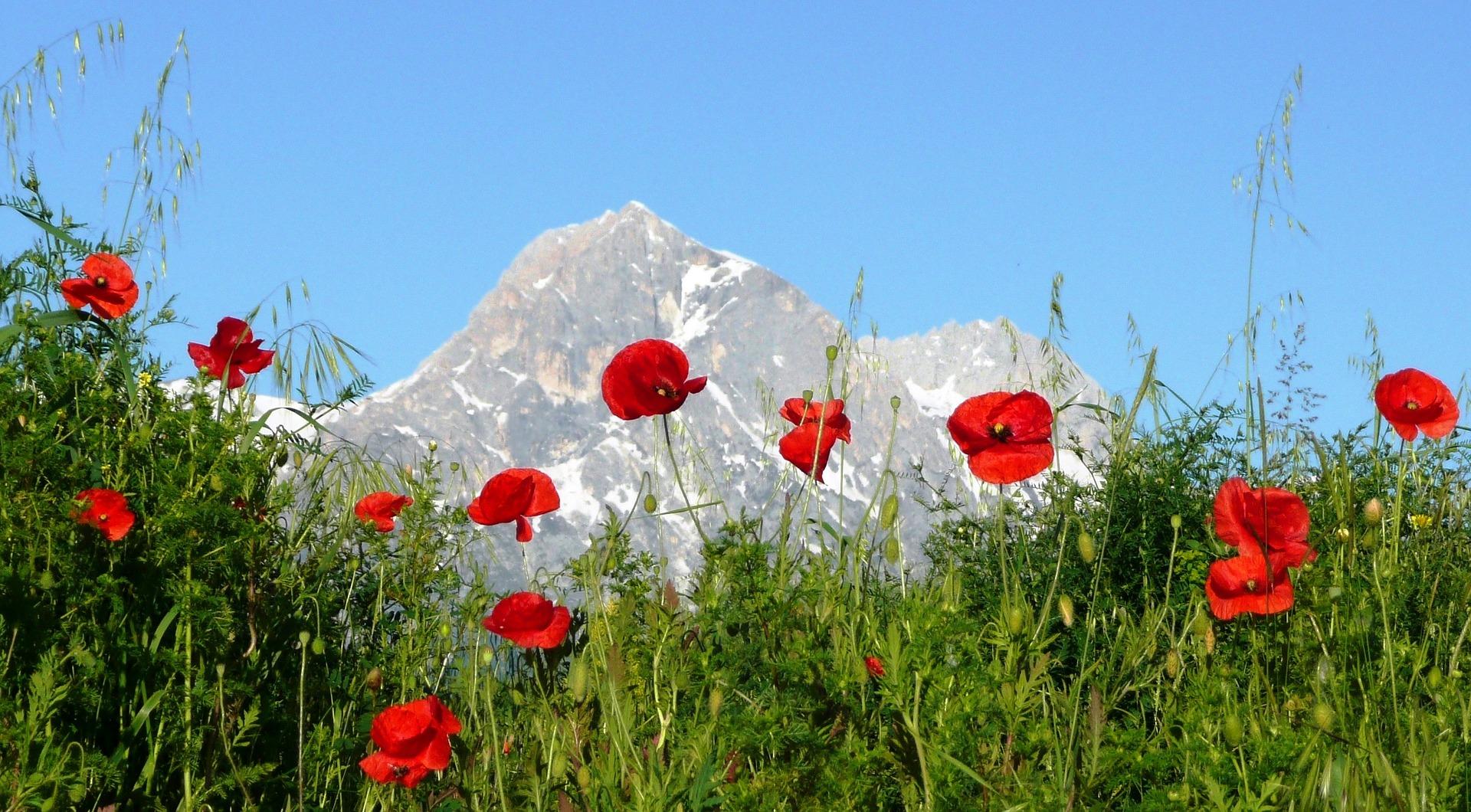 Abruzzo Natural Parks - Papaveri Gran Sasso.jpg