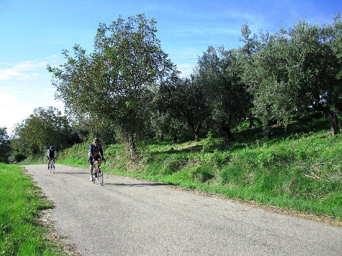 Greenbelt of Abruzzo - Olive Groves.jpg