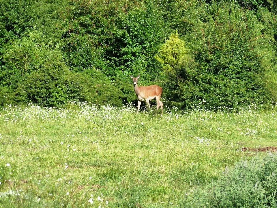Abruzzo Natural Parks - Lago di Scanno