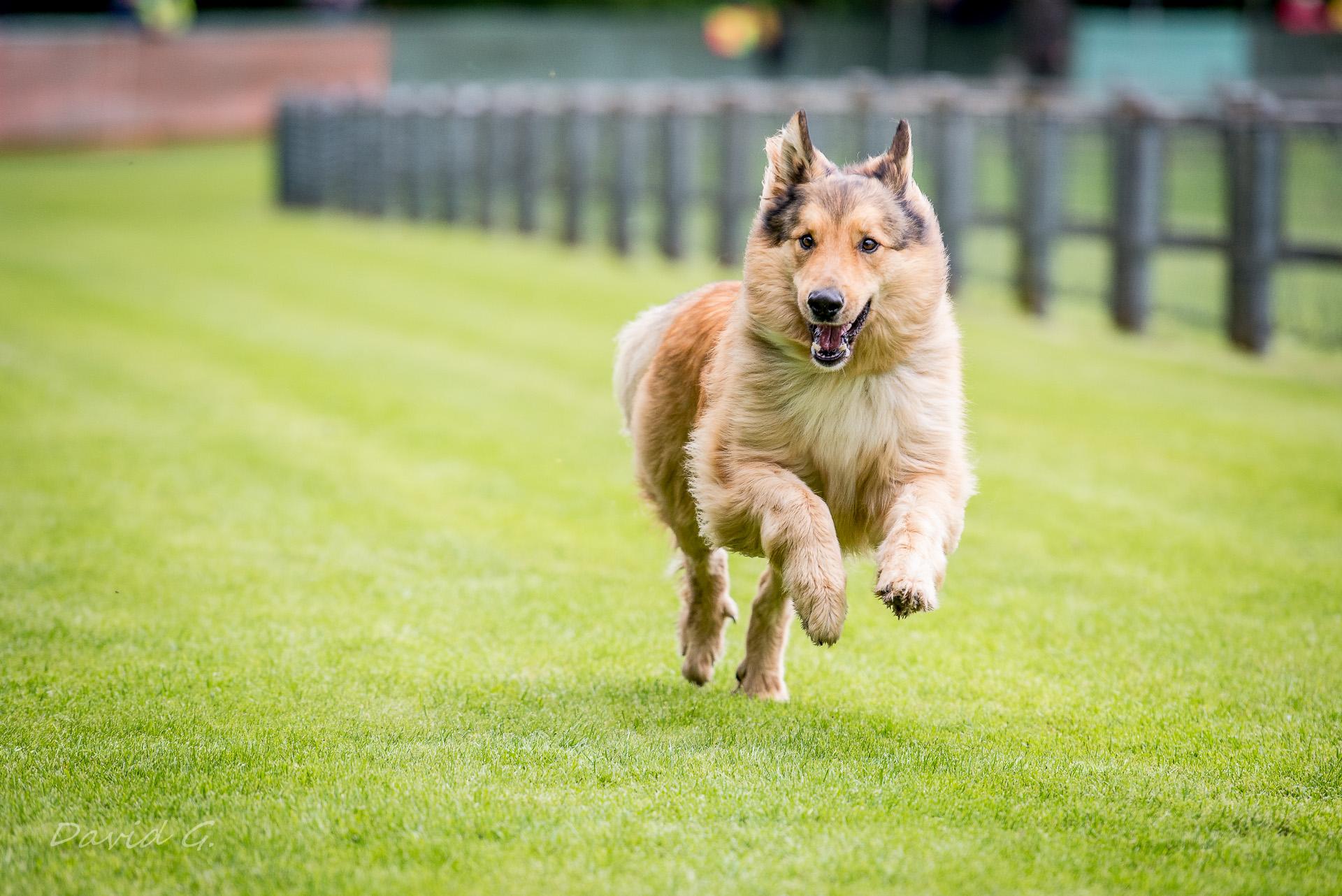 Jederhundrennen in Köln am Decksteiner Weiher Bild von Hund rennt über die Wiese