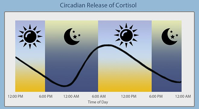 Cortisol levels should be highest upon waking and slowly decline throughout the day.