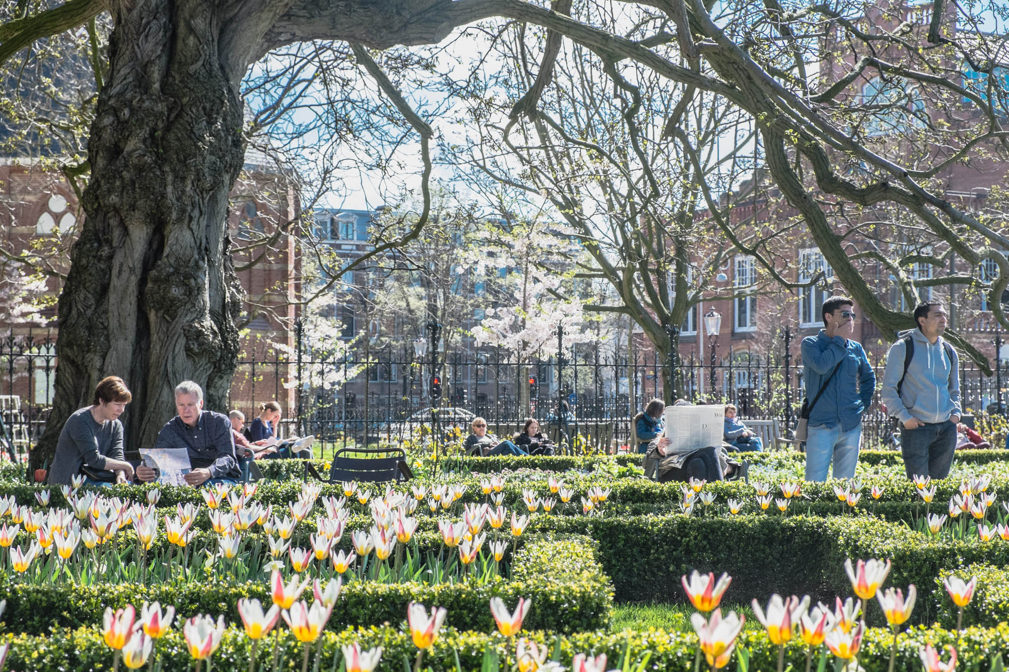 Rijksmuseum garden. Pretty compact yet centrally located within the museum quarter area.