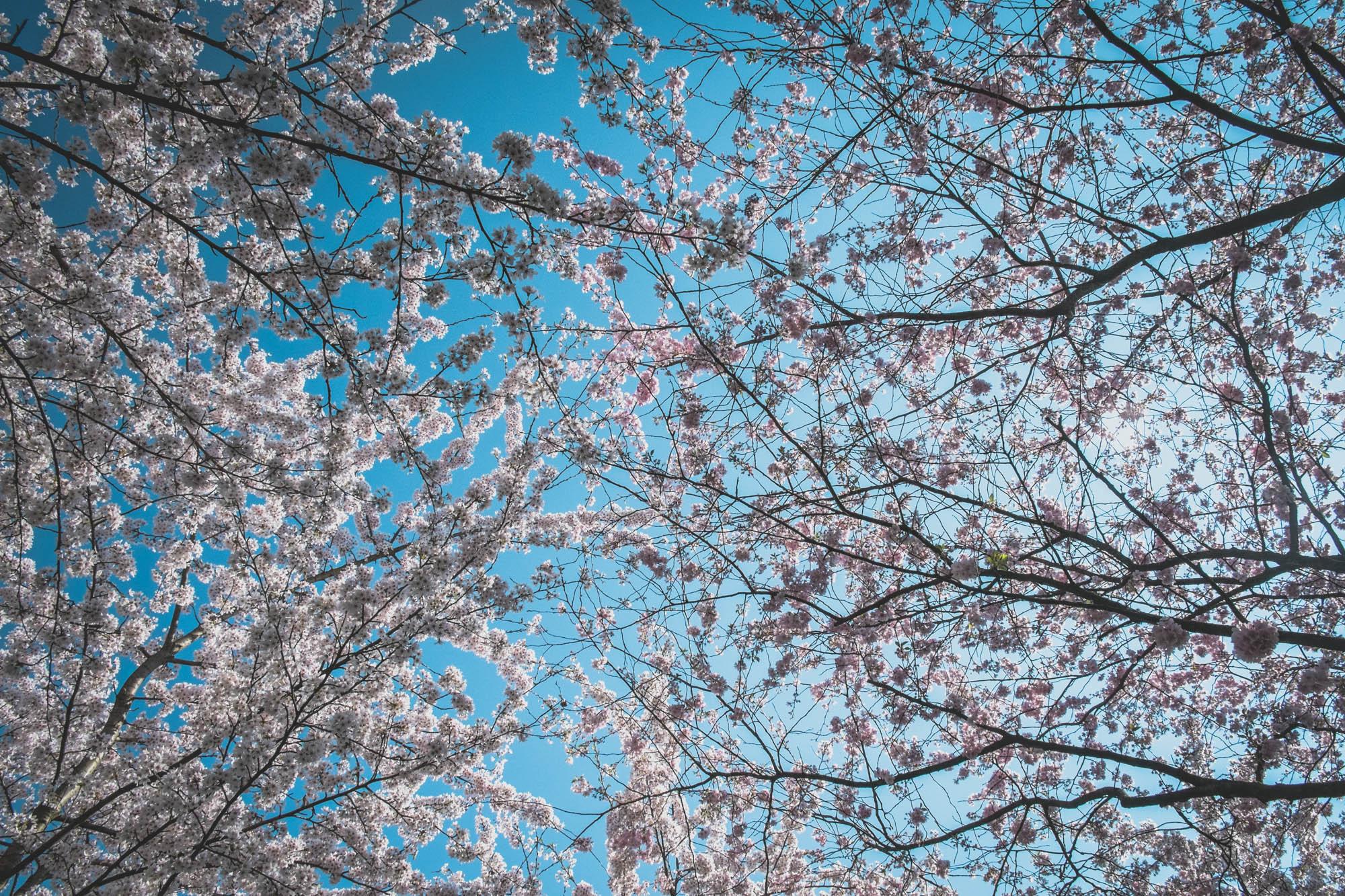 Free desktop wallpaper to celebrate spring.