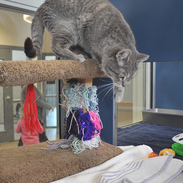 Tracy Animal Shelter - double compartment housing. Gives cat. This cat loved the camera. #animalshelter #shelterarchitecture #architects #tracycalifornia #tracyanimalshelter
