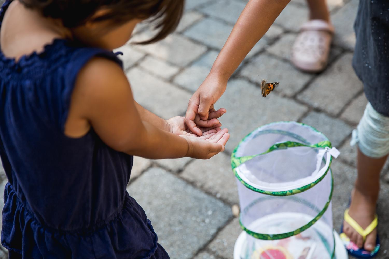 hatching butterflies